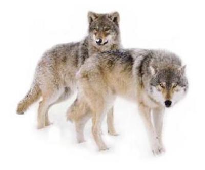 couple-thumb dans faune